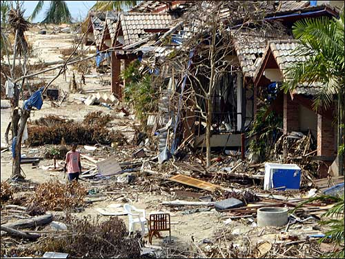 A member of the staff of Khao Lak natural resort walked through the debris of washed away bungalows.