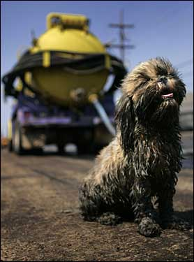 small oil-slickened dog