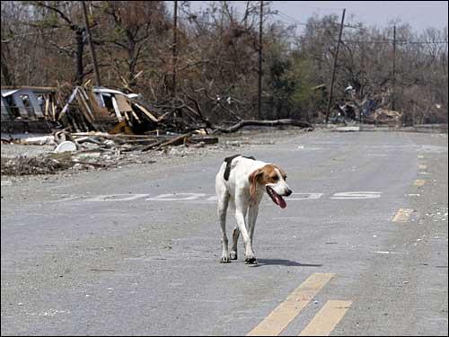 lone dog in Louisiana