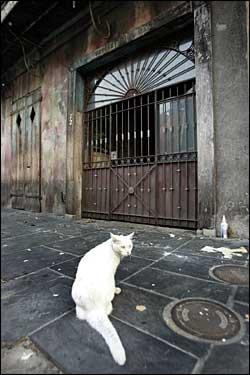 Preservation Hall cat