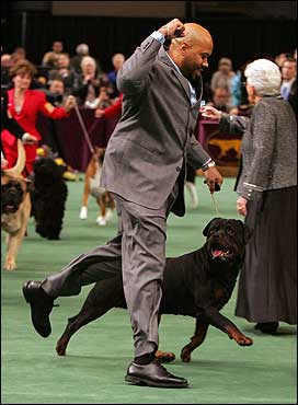 Keith Carter, a former Florida State linebacker, raised his arm after hearing that his Rottweiler, Shaka, won 'Best in the Working Dog Class.'