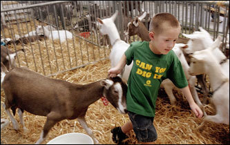 ' Goat rodeo and herding cats are used a lot around here, but they are kinda funny if you think about them,' suggests low25 .