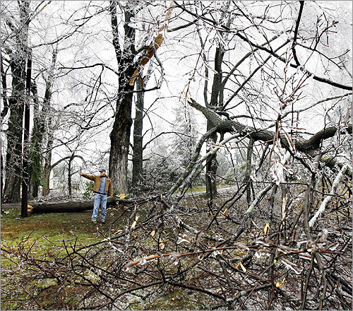Frank Armitage surveyed the damage to his property in North Andover after icing caused large trees and branches to break and fall.