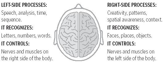 Brain functions - Boston.com