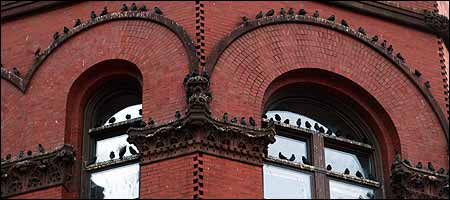 Starlings, ousted from the old Green Line tracks, dot a Causeway Street building. (Globe Staff Photo / Bill Greene)