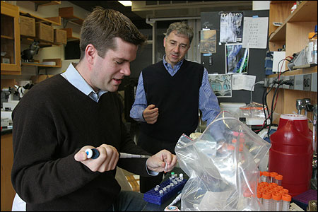 Douglas Melton, co-director of the Harvard Stem Cell Institute, looked on as Kevin Eggan prepared a DNA sample last week. The two hope their research leads to treatments for juvenile diabetes, Parkinson's disease, and other illnesses.
