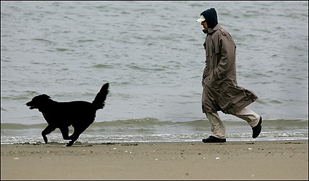 Shadow and his master, Eric Brown of Brookline, had a wet, windy walk along Carson Beach in South Boston yesterday. The forecast is much improved for this weekend.