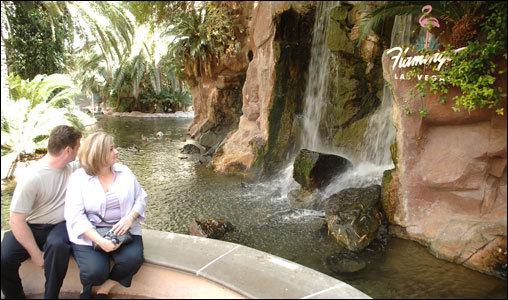 The waterfalls at the Flamingo Pool.