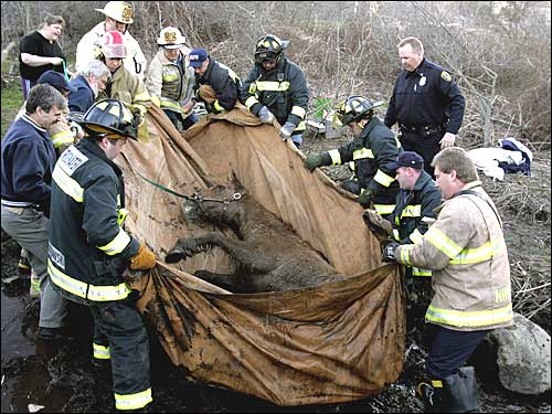 horse being saved