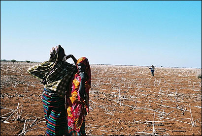 A woman and a girl stood in a field outside Wajid, Somalia, that has not produced a crop of sorghum, a grassy grain that is one of the foundations of the Somali diet, in two years.