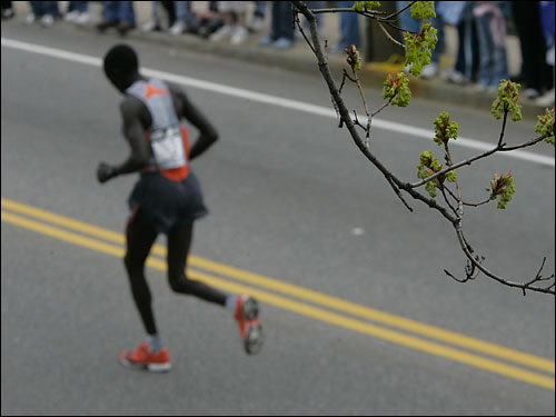 Elite male runners warmed up under early spring buds on trees at the starting line of the 110th running of the Boston Marathon.