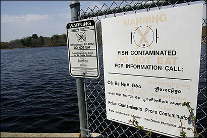 Signs over the Myrtle Street Bridge warn against eating fish from the Sudbury River, which is polluted with mercury.