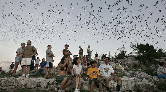 As the sun sets in Uvalde, Texas, visitors take in the evening spectacle at one of the entrances to Frio Cave, as tens of thousands of Brazilian free-tailed bats emerge for a night of insect hunting.