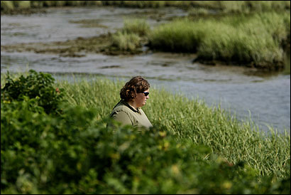 Researcher Sara Grady surveys an area inside the Ellisville Harbor State Park, which has signs of wetland dieback.