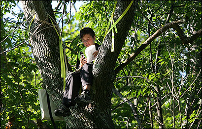 Middlesex graduate Molly Tsongas, 26, daughter of the late Paul Tsongas, took refuge in a tree to protest the school's plan to use Estabrook Woods.