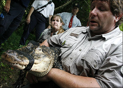 Joaney Gallagher (left) and Michael Ralbovsky, with the 6-foot alligator Ralbovsky captured yesterday in a swamp in Townsend.