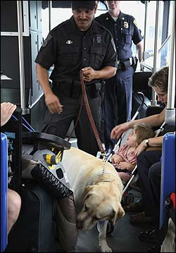 Officer Luis Feliciano led his explosives-detecting dog down the aisle of a Silver Line bus bound for Logan Airport yesterday, getting the attention of little Ella Moye-Gibbons of Dorchester.
