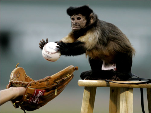 Ayla the monkey threw out the first pitch.
