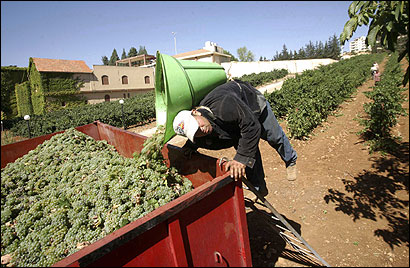 War between Israel and Hezbollah halted the flow of tourists to Ksara winery.