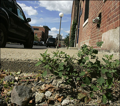 Crumbling concrete sidewalks, such as this one on Plympton Street in the South End, have prompted the civic-minded to look into using slates made from recycled rubber.