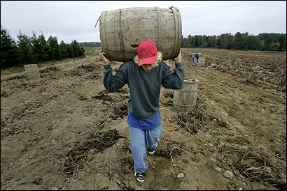Dakota Michaud, 14, carried a barrel at Dale Holmes's potato farm, one of Aroostook County's last farms to use hand-pickers.