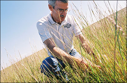 Randy D. Rodgers, a wildlife biologist for the Kansas Department of Wildlife and Parks, knelt in a field of native grass in Ness City that he says has attracted wildlife back to the prairie, including the lesser and greater prairie chicken.