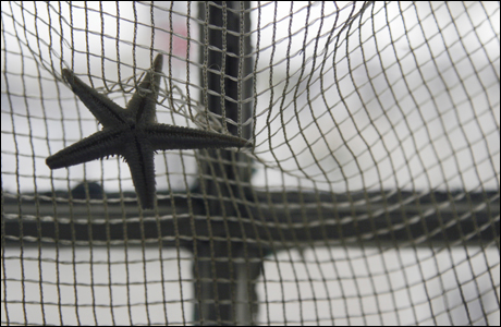 In the window of the Isles of Shoals gift shop, a starfish hangs on some netting.
