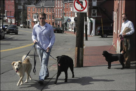 Along Bow St. Ryan Roskilly walks his dogs.