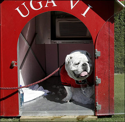 Even dog celebrities need privacy, so Uga VI enjoys downtime in his air-conditioned home.