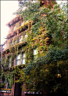 Continuing down Pinckney Street, a brownstone can be seen covered in leaves changing colors for the fall.