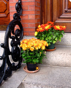 Flowers on a doorstep on Pinckney Street.