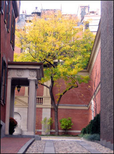 A cobblestone driveway leads to a beautiful tree covered in yellow leaves on Mt. Vernon Street.