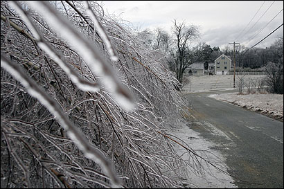 Icy birch branches bowed toward the ground yesterday in Derry, N.H. Homes and firms in southern New Hampshire lost power as ice also coated transmission lines.