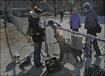 Rebecca Willson got a greeting from Willie, who stood high up on the gate in Peters Park in the South End yesterday.
