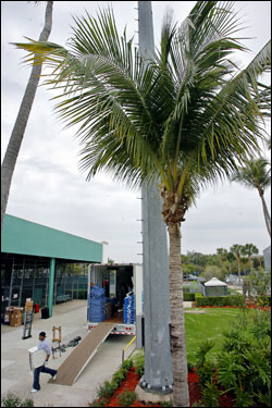 The Red Sox equipment truck was parked under some palm trees outside the team clubhouse at City of Palms Park.
