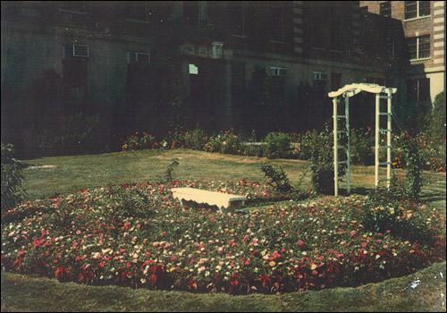 Greco's garden
