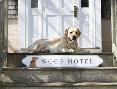 The wags at Harbor House Village on Nantucket have a welcoming new 12-room, stand-alone place for you and your best friend, complete with an island dog directory.