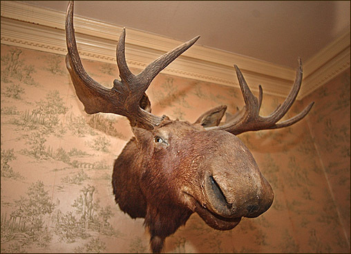 a large moose head keeps watch over the front stairwell