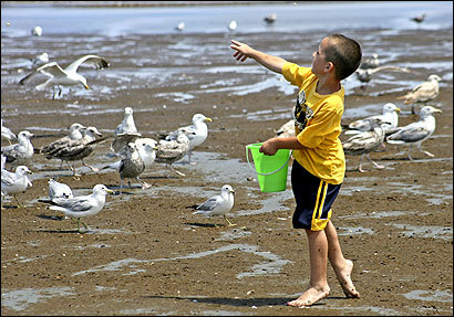 Michael Terrill, 5, played near the Lynn-Nahant line. Many say the beach's smell seems worse than in the past.