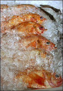 Ocean perch for sale at Harbor Fish Market.