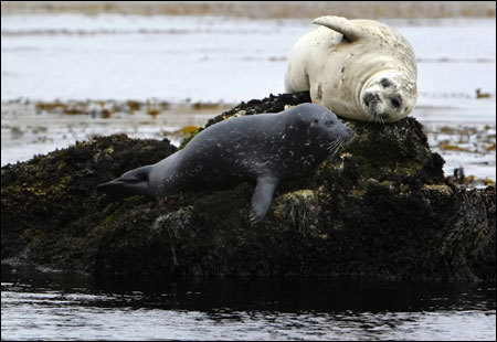 Seals lay on rocks near the Monterey Bay Recreation Trail.