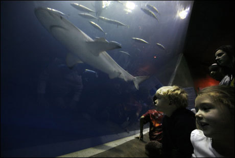 Siblings David Tobin, 4, and Delaney Tobin, 6, of San Francisco get a close up look at a shark while visiting the Monterey Bay Aquarium with their grandparents.