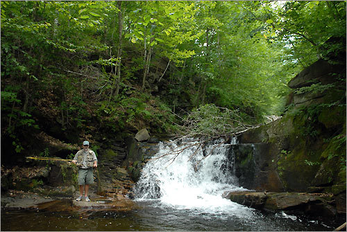 Monninger fly-fishes in one of his favorite spots on the Oliverian Brook near Warren. There are three waterfalls that cascade down forming pools for good fishing.