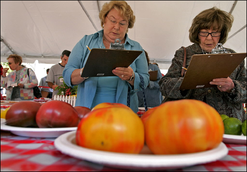 Judges Gloria Gioseffi (left) and Ethel Goralnick marked down their scores for tomatoes at the 23d Annual Massachusetts Tomato Festival and Contest. The event is the official kick off of the Massachusetts Farmers' Markets Week at City Hall Plaza in Boston.