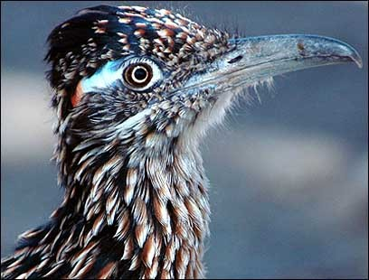 A roadrunner proves there is some life in the harsh desert environment.