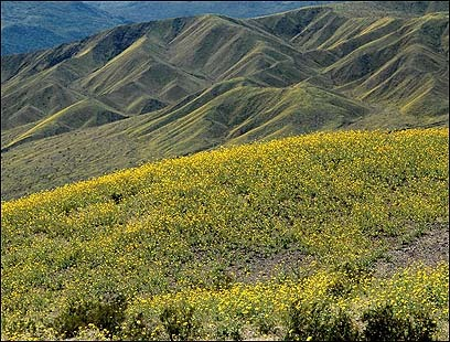 Wildflowers cover the desert landscape.