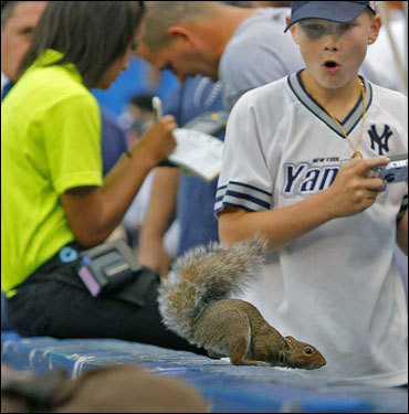 Before the game a squirrel appeared on the wall at Yankee Stadium...