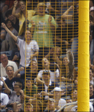 ... Fans in right field cheered the squirrel as he made his way down the foul pole.