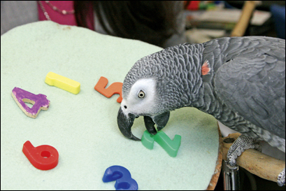 Alex was an African gray parrot whose research role at Brandeis University shattered science's understanding of the avian brain.