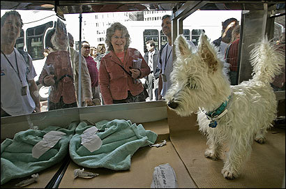 Jack, a West Highland white terrier, commanded an audience outside an Animal Rescue League van yesterday at City Hall Plaza.
